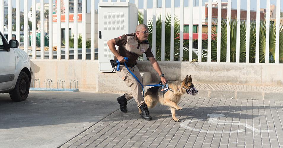 Vigilancia con perros – Unidad Canina Vigiprot