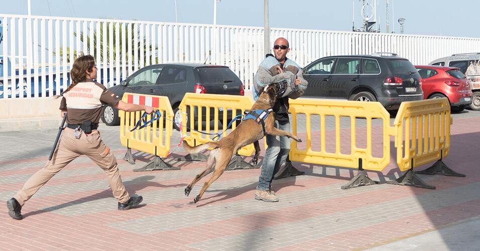 Vigilancia con perros. Unidad Canina- Vigiprot